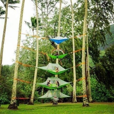 Canopy Tribes